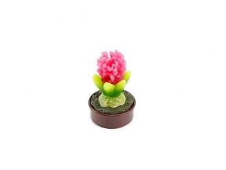 Teelicht Hyazinthe pink