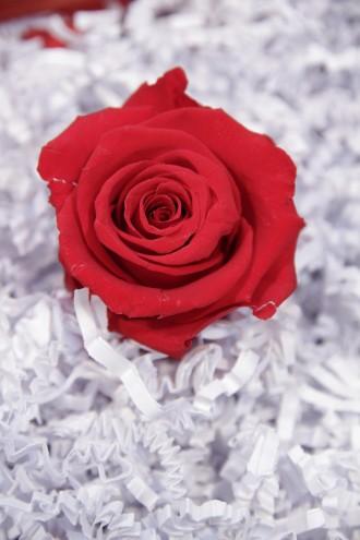 Konservierte rote Rosenköpfe
