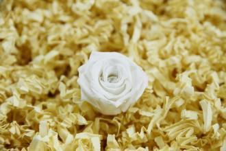 Konservierte weiße Rosenköpfe (klein)