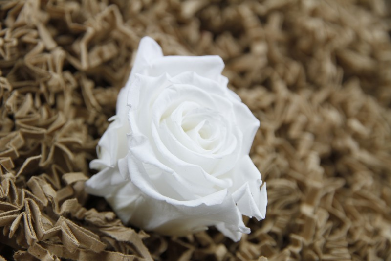 Konservierte weiße Rosenköpfe