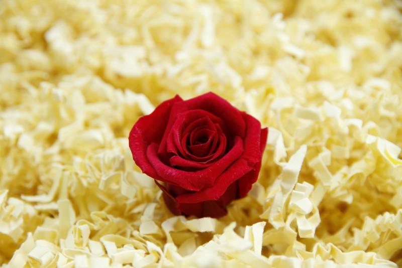 Konservierte rote Rosenköpfe (klein)