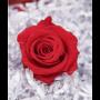 Dekorose rot (groß)