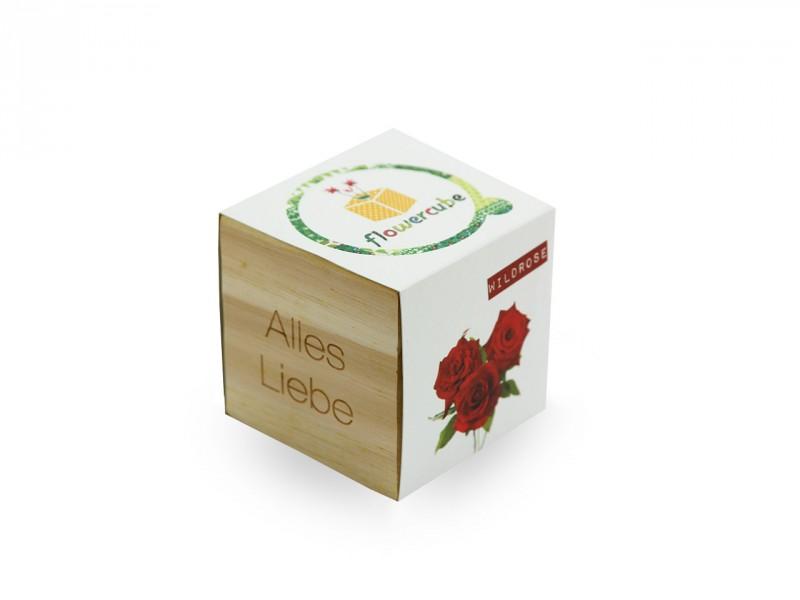 Flowercube *Wildrose* - Alles Liebe